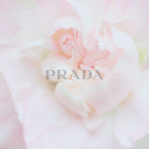 rose_logo